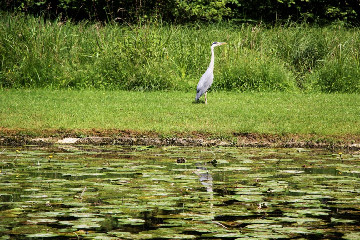 Heron Chantilly France Paris Day Trip Wildlife English Garden