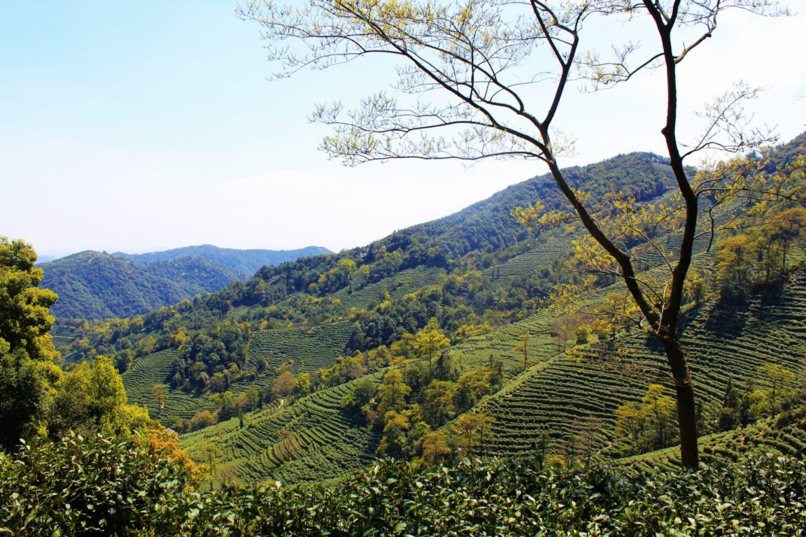 Longjing Tea Terraces Hangzhou Best Unmissable Hikes in China