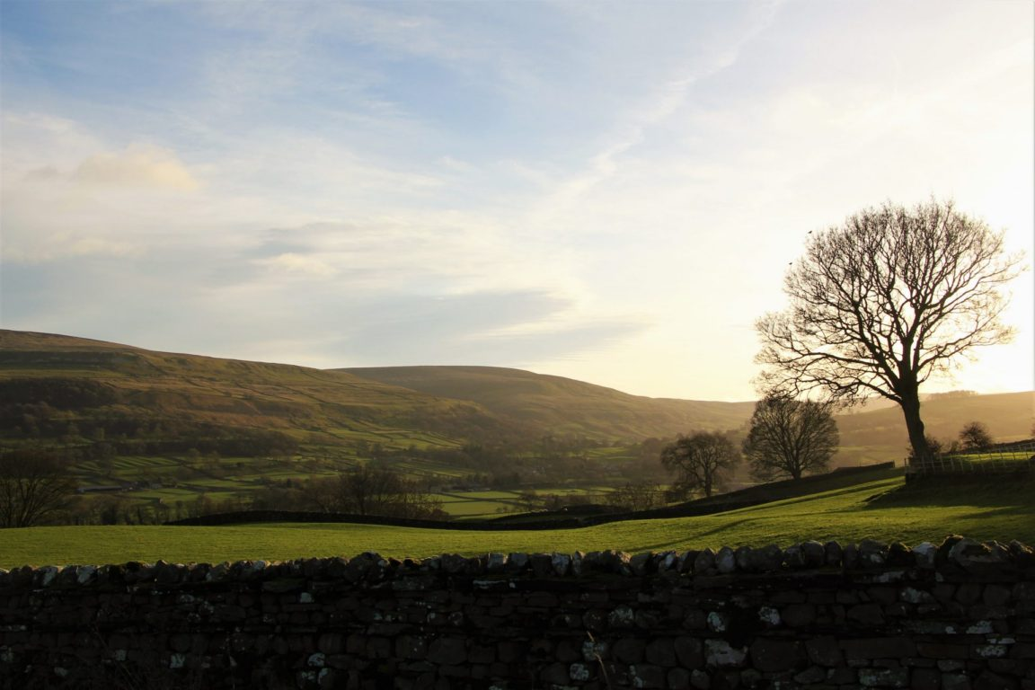 Pretty views of a lonely tree from Aysgarth Village in North Yorkshire