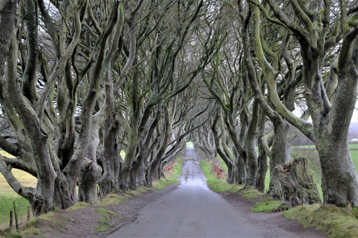 Dark Hedges in Northern Ireland without the crowds