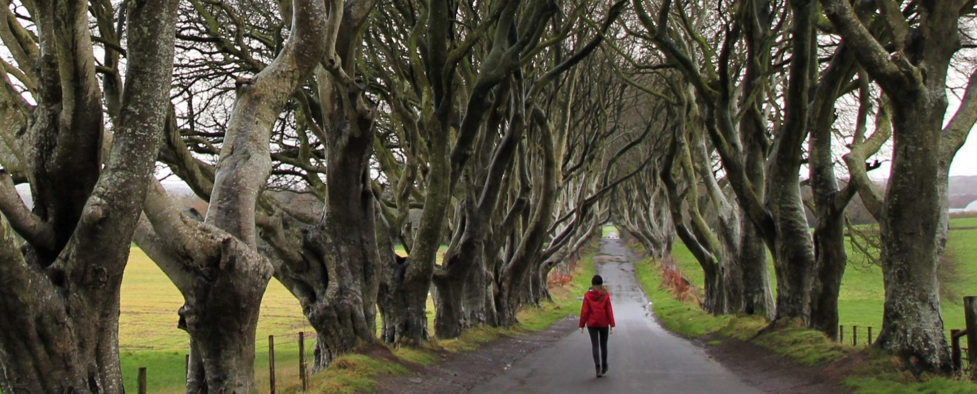 Dark Hedges in Northern Ireland without crowds