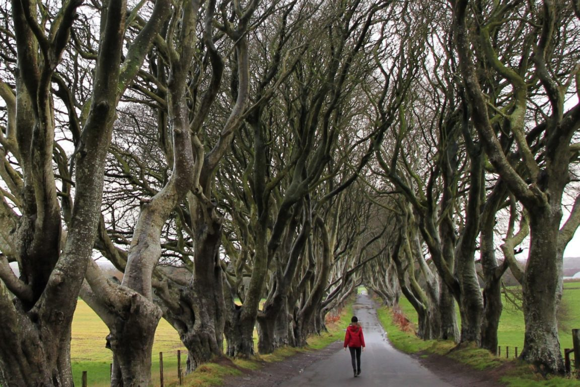 dark hedges no people
