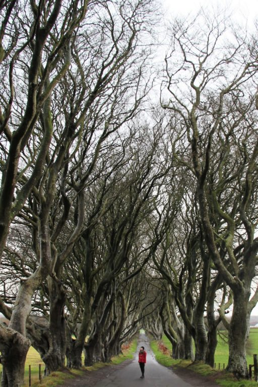 Dark Hedges in Northern Ireland without the crowds in the winter