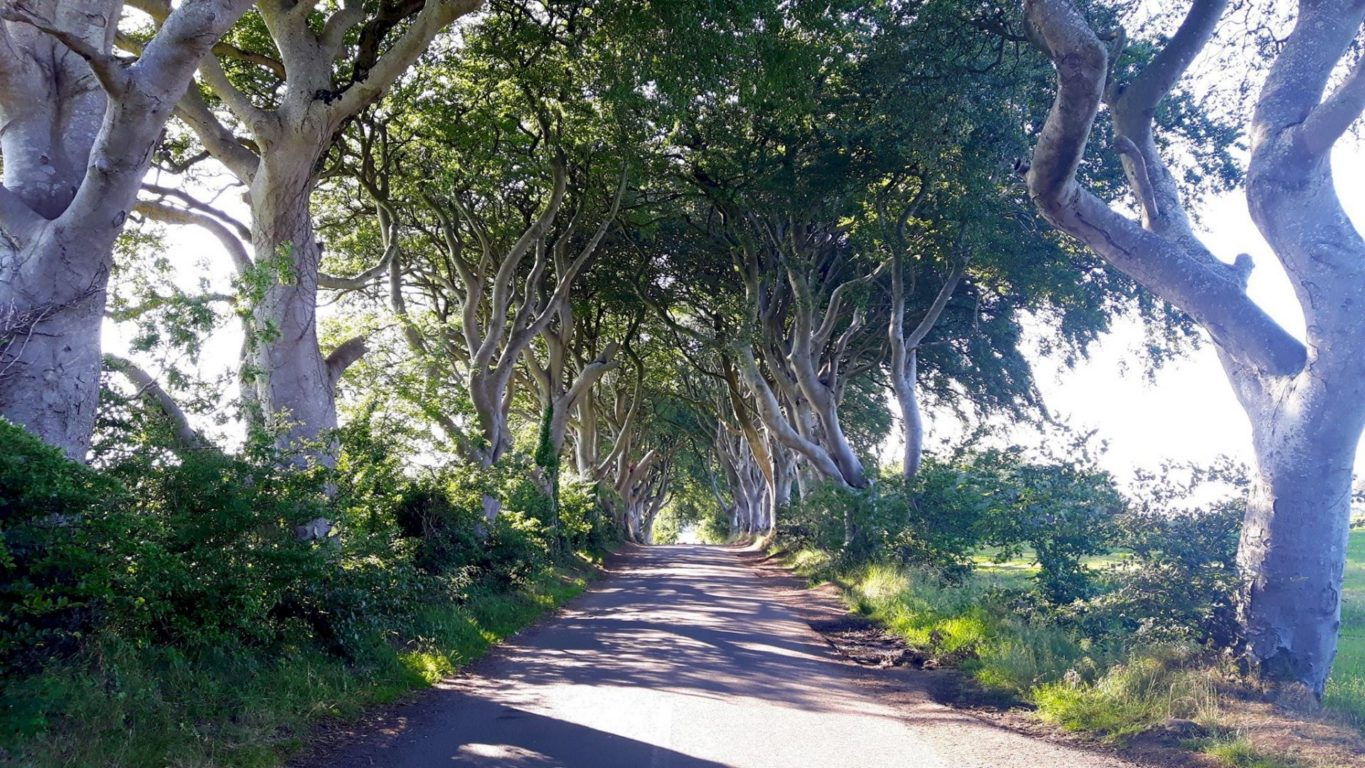 Dark Hedges in Northern Ireland without the crowds in the summer