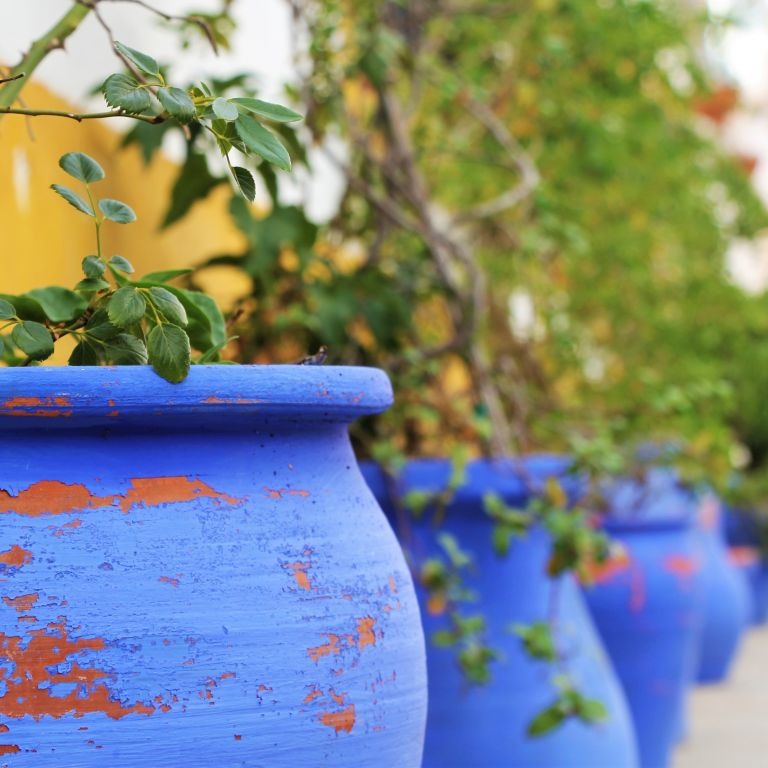 blue flower pot in Cordoba