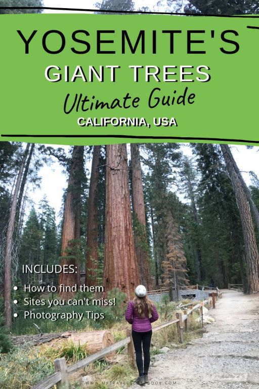 Visiting the giant trees in Yosemite National Park! The Mariposa Grove is home to ancient sequoia trees. These gorgeous giants must be on your Yosemite itinerary! Click here for the ultimate guide to the Mariposa Grove of Giant Sequoias in Yosemite, California. There are ten amazing things to do in the Mariposa Grove! #yosemite #sequoia #california