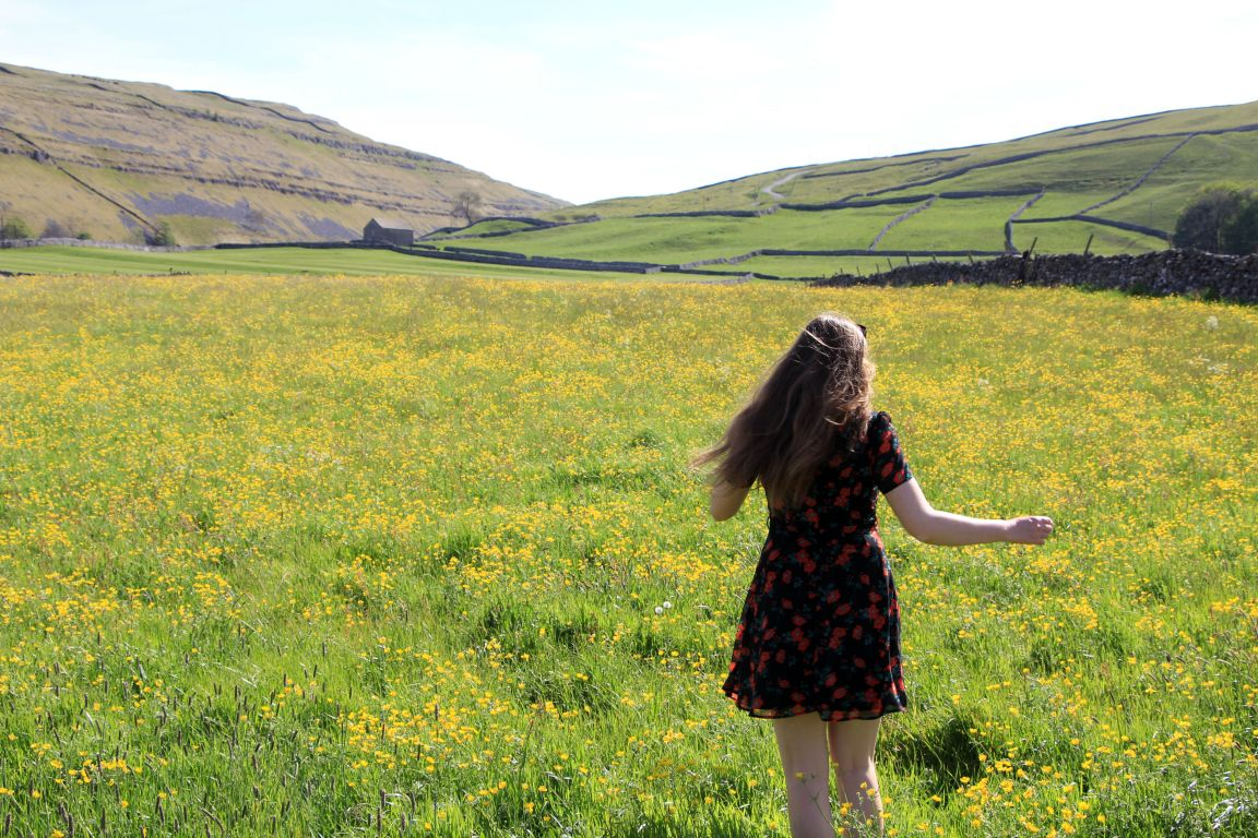 littondale wildflower meadow