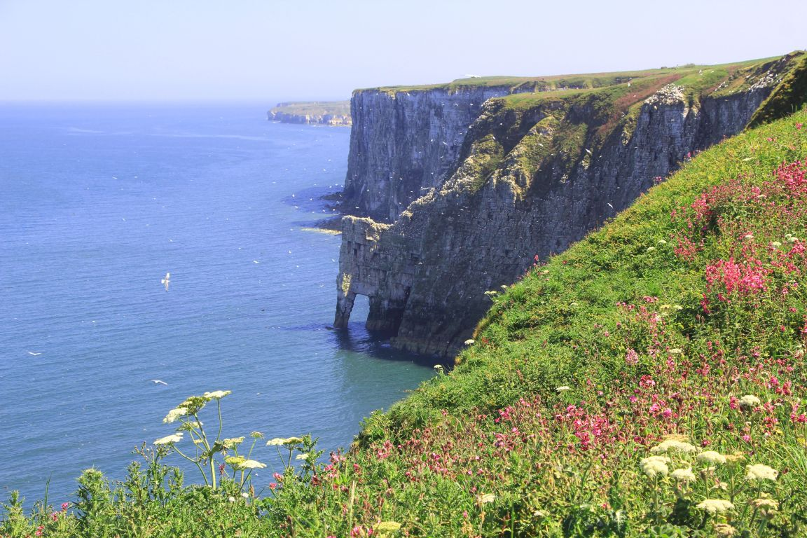 sea arch bempton cliffs flamborough head